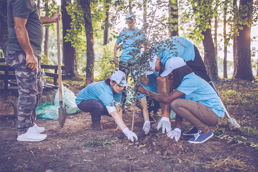 People planing a tree in the forest